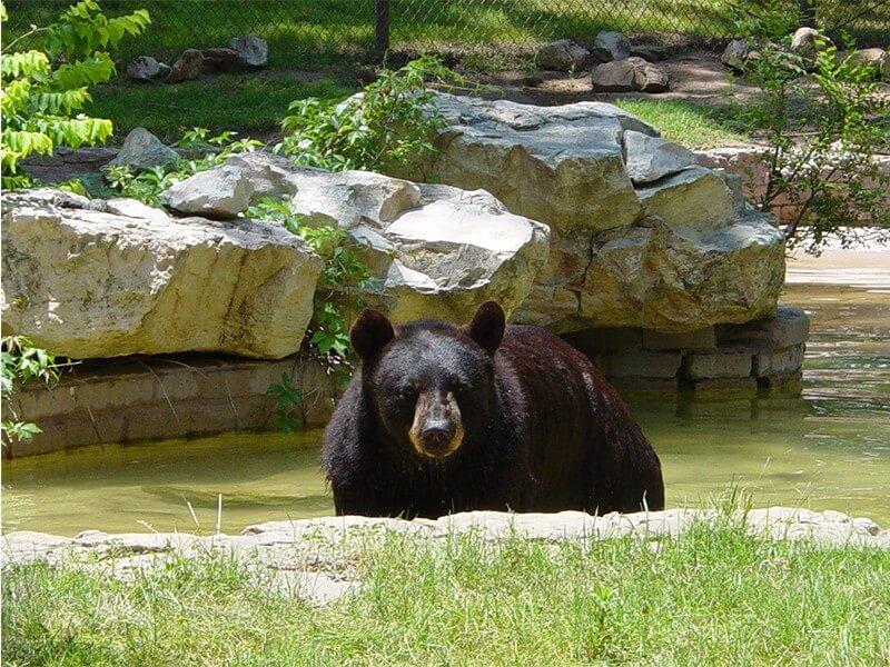 Amarillo Zoo In Amarillo Texas Funthingstexas Com